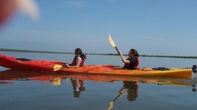 Seeing the Real Florida: Kayaking the Mangrove Marsh